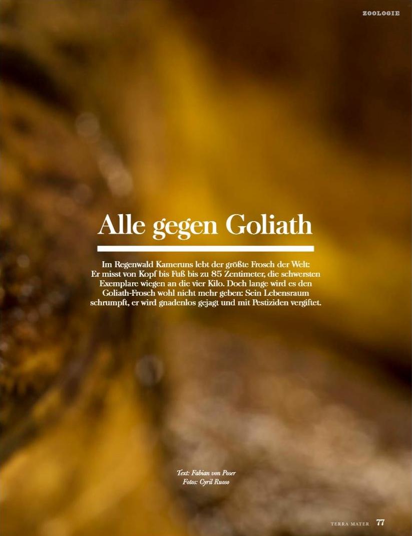 Alle gegen Goliath